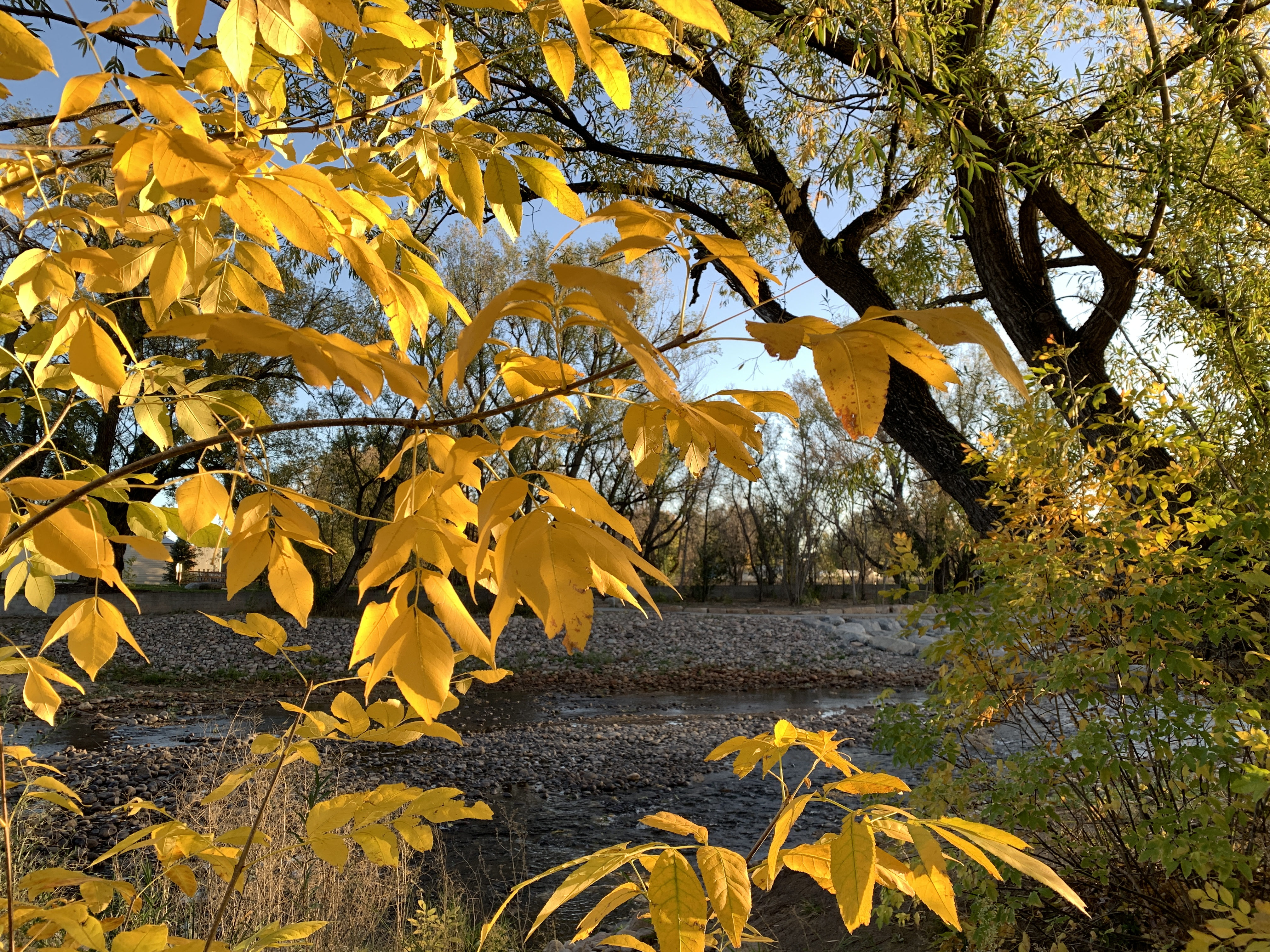 Poudre River fall Oct 12-2020 by KV